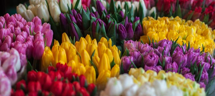 Spring is a wonderful time to enjoy shopping, dining, and the wonderful sights in Abington, Montgomery County PA